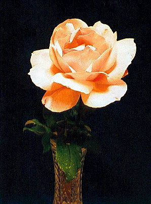 Rose in Crystal Vase.jpg (32305 bytes)