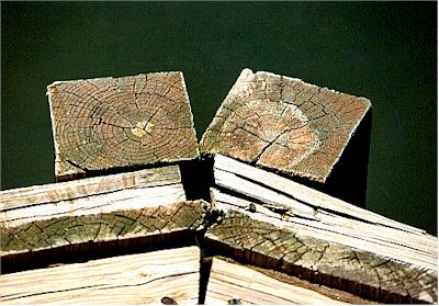 Wood n Water.jpg (38159 bytes)