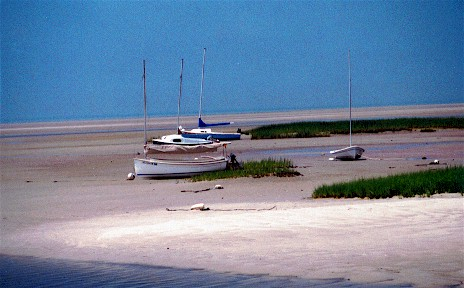 cc low tide at Boat Meadow.jpg (43827 bytes)